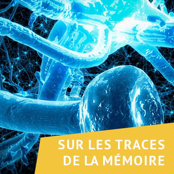 Sur les traces de la mémoire